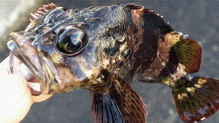 今年の釣り初めは元日から!千葉内房での堤防からの五目釣りとアナゴの巨大な干物