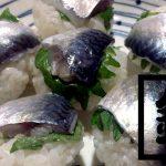 釣ったケンサキイカを捌いて絶品刺身!鯖・アジはしめ鯖と干物にして釣りメシ