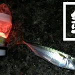 茨城県鹿嶋で堤防夜釣り!秋の釣果はアイナメに小サバ・アジなど