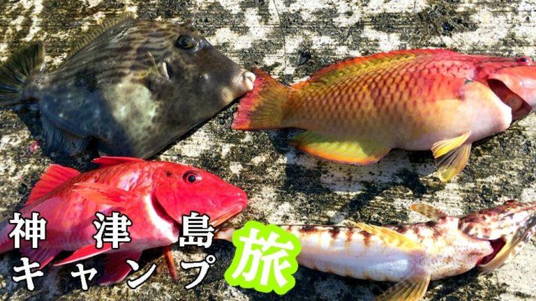 早朝堤防釣りでオジサン・カワハギ・エソ・ベラ!|神津島釣りキャンプ