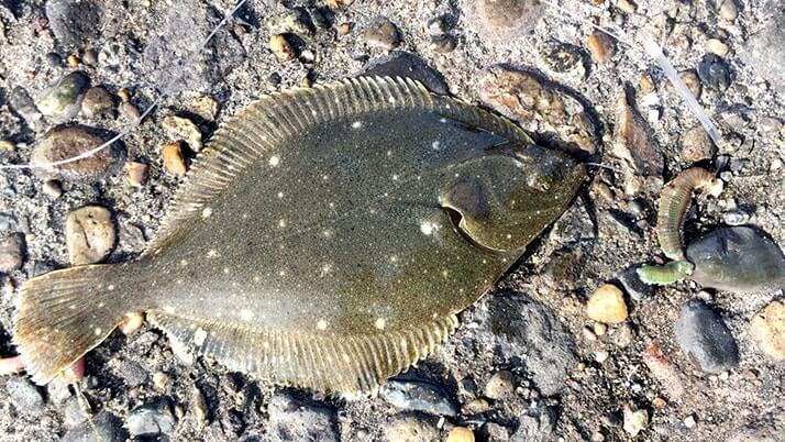 ウルメイワシがサビキで入れ食い!茨城県鹿嶋で堤防海釣り