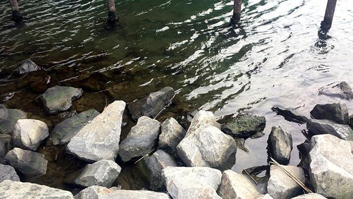 イカの塩辛を餌に春の釣り!旧中川でダボハゼに遊んでもらいました