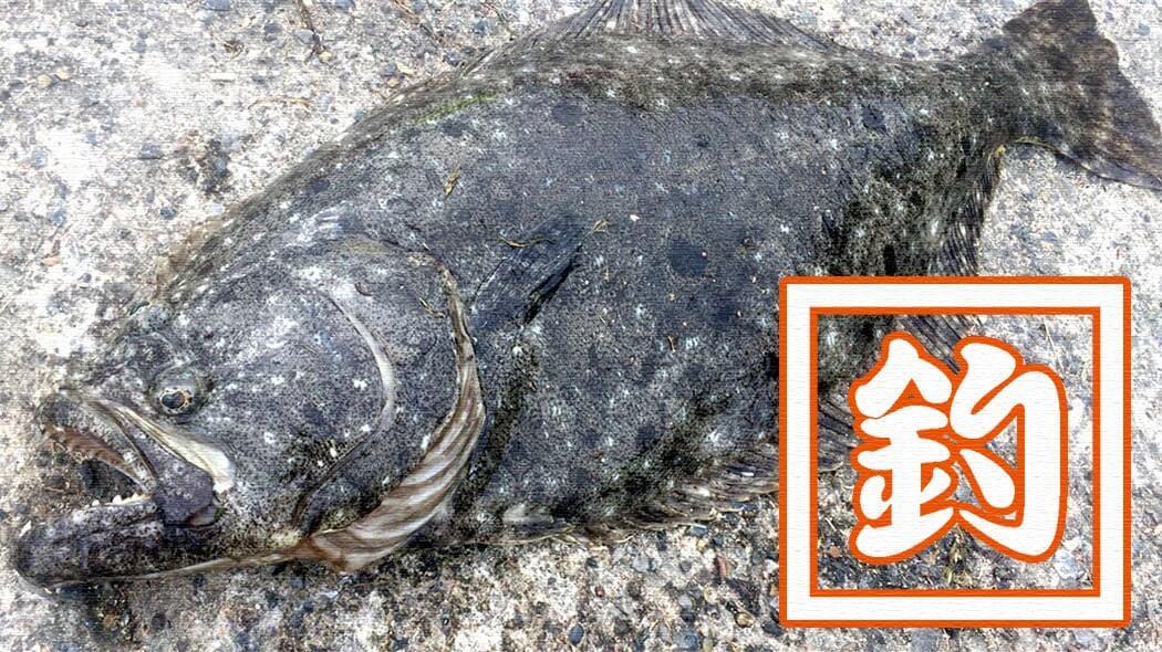 堤防釣りで70cmのヒラメが!千葉南館山での泳がせ釣りで大物GET