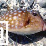 千葉館山自衛隊堤防で冬釣り!若潮も時合はアオアジ入れ食い