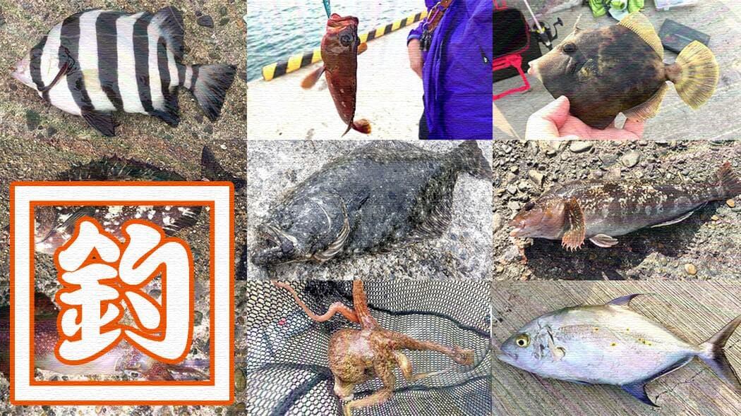 海釣り釣魚写真図鑑|堤防で釣れる魚の種類(防波堤・漁港)川釣りも