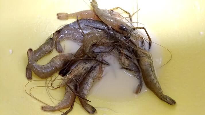 釣ったテナガエビでアヒージョとハーブソテー!【釣りメシ】