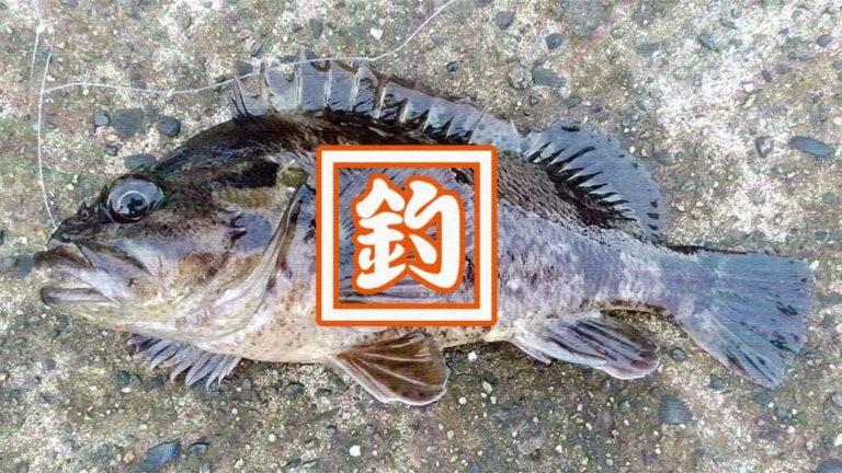 千葉内房堤防での釣りで良型カサゴ&ムラソイ!キスも釣れた秋終盤五目釣り