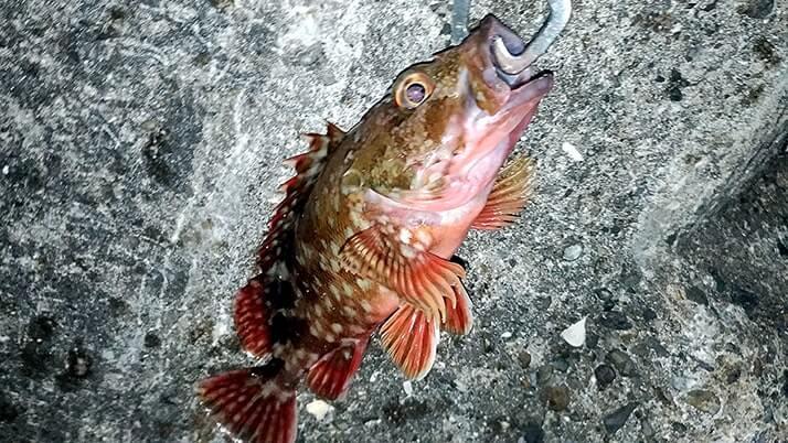 強風の中での堤防釣り…フカセ釣り中断で穴釣りがベスト?【千葉内房】