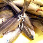 中川シーバス釣り|セイゴだけ…でも嬉しい!スーサンでHIT