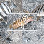 ムロアジ釣って泳がせ釣りでカンパチ!は叶わず…新島釣りキャンプ【DAY2 前半】