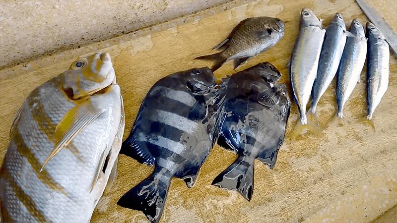 ムロアジ・イシダイの塩焼きとタカノハダイの漬け|新島釣りキャンプ【DAY2 ランチ】