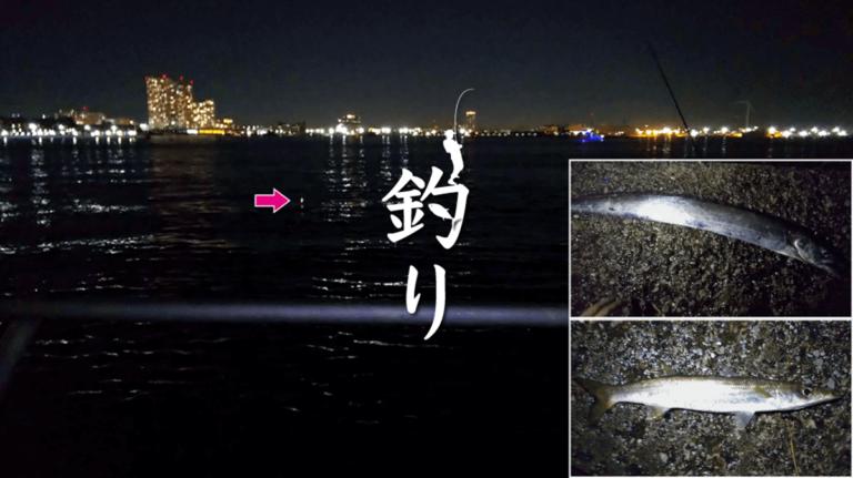 タチウオ釣り!横浜みなとみらいでの都会冬釣りでカマスも