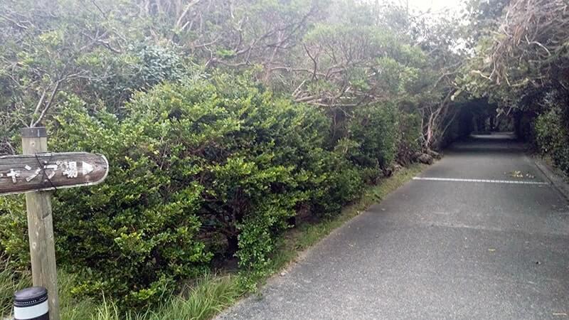 羽伏浦キャンプ場|新島の無料キャンプ場がオススメ!【設備レビュー】