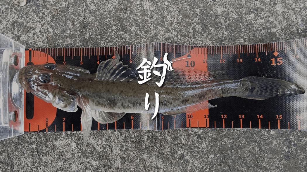 中川で冬の落ちハゼ釣り!ハゼとは言え引きが良い良型揃い!!