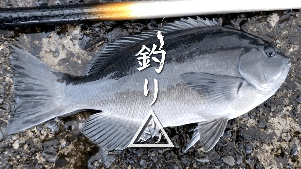 グレ・イシガキダイ・サバ…渋くて苦戦の朝マズメ釣り|新島釣りキャンプ第二弾【DAY6 前半】