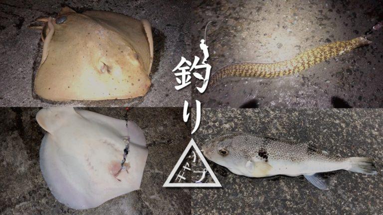 サバ切り身のぶっこみ釣り!エイ・ウツボ・アナゴ…魚種豊か(笑)|新島釣りキャンプ第二弾【DAY7 後半】