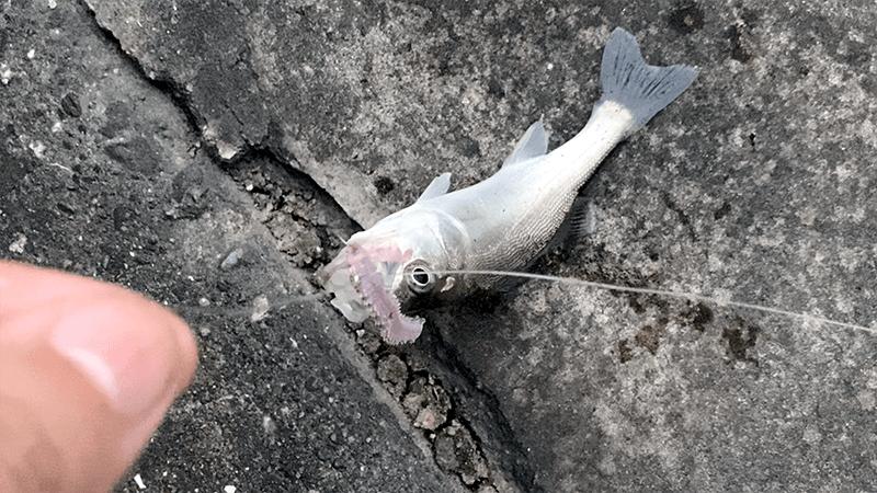 東京中川でウナギ釣り!夏夜に鈴の音を待つのんびり釣り