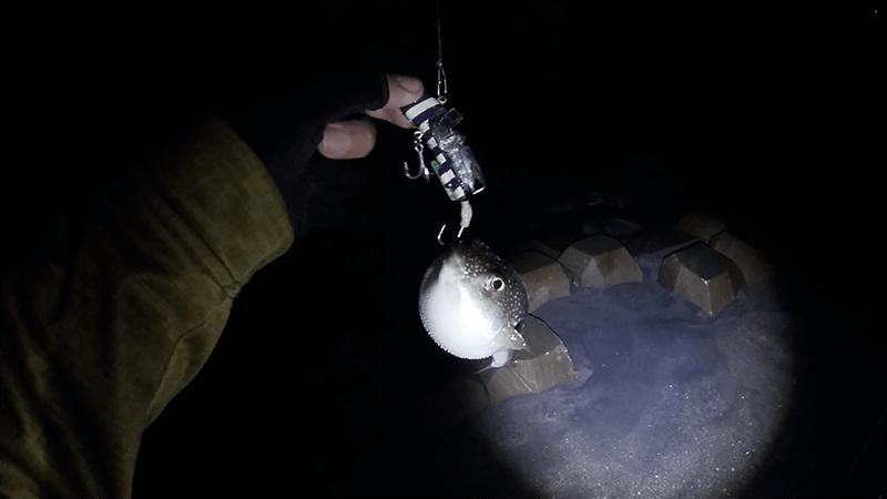 湾奥ルアー釣りでタチウオ狙うもコノシロすれがかり…