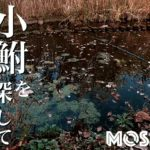 "<span class=""title"">小鮒を探して秋の小物釣り!水元公園でクチボソ(モツゴ)とフナを釣る</span>"