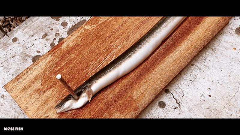 釣ったウナギでうな重ひつまぶしと白焼き!中川で釣ったウナギを捌く