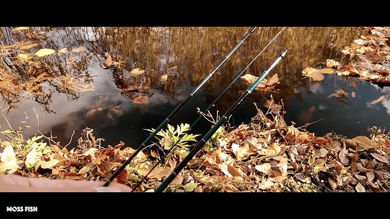 水元公園で小物釣り|秋の東京でモロコ・モツゴ(クチボソ)と遊ぶ
