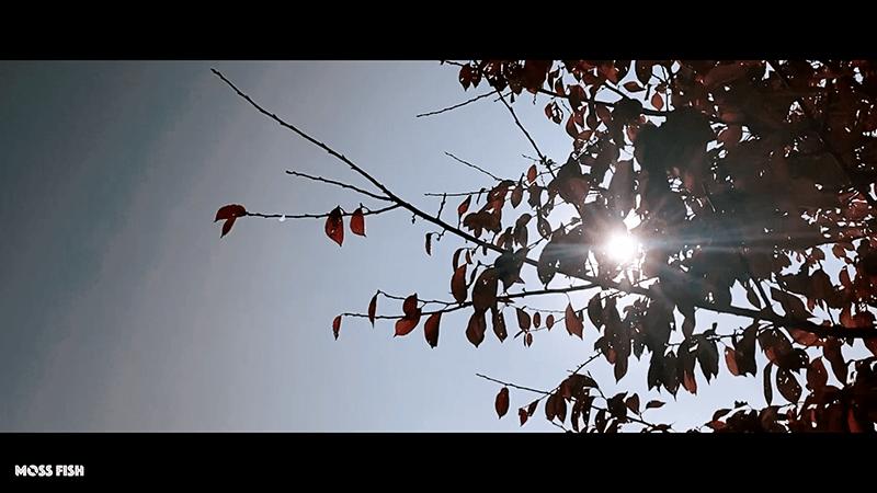 小鮒を探して秋の小物釣り!水元公園でクチボソ(モツゴ)とフナを釣る
