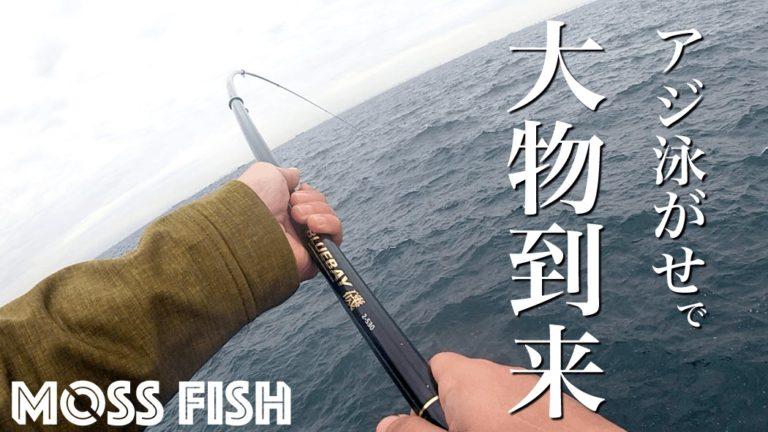 アジ泳がせ釣りで大物到来!も…メーター級のサメ(笑)