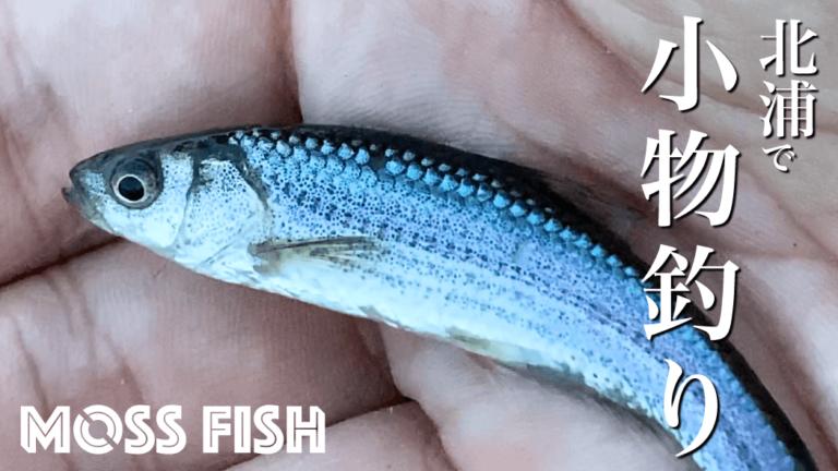 北浦周りのホソで小物釣り!初冬にタナゴ仕掛けでクチボソを釣る