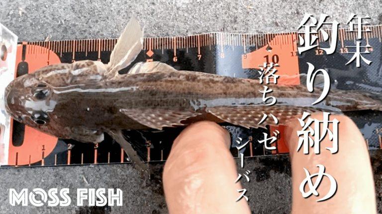 落ちハゼを釣る!年末冬の中川でマハゼとシーバス釣り納め