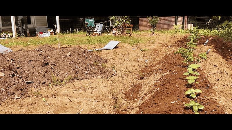 焚き火で山菜山椒パスタのち家庭菜園畝追加 ほんのり田舎暮らし