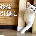 """<span class=""""title"""">東京からほんのり田舎へ愛猫と移住!キャットウォークをDIYして猫と暮らす</span>"""