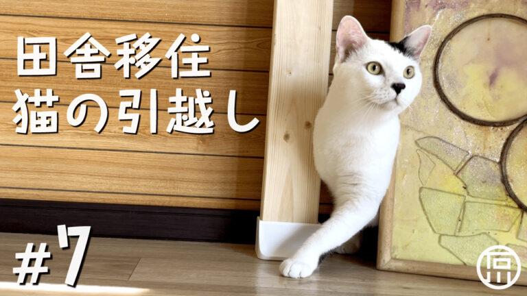 東京からほんのり田舎へ愛猫と移住!キャットウォークをDIYして猫と暮らす
