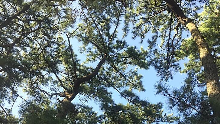 富津公園キャンプ場でバーベキュー!海まで歩いてすぐの好立地